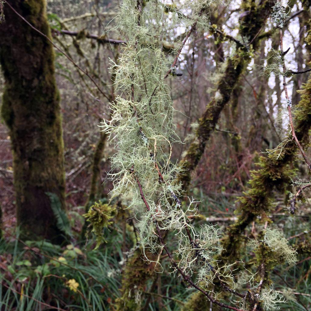 gray-green-moss