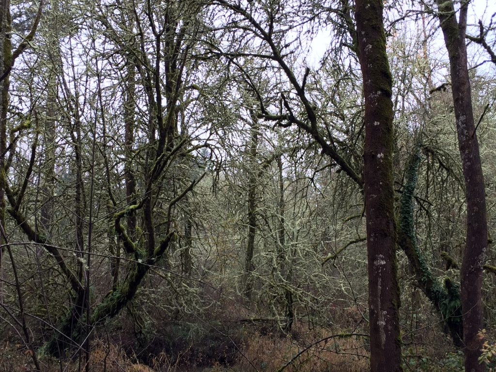 mossy-trees-2